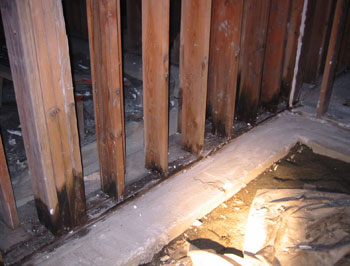 Rot damaged framing in crawl.