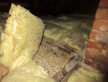Vermiculite insulation (suspect asbestos containing material) in attic